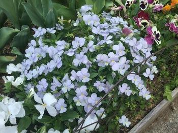 2016Apr30-Flower1 - 1.jpg