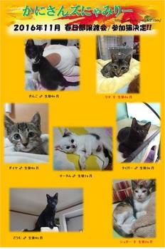 2016年11月参加猫.jpg
