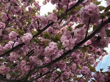 2019Apr21-Flower2 - 1.jpg