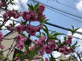 2019Apr21-Flower3 - 1.jpg