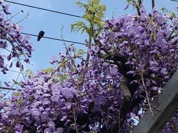 2019Apr21-Flower8 - 1.jpg