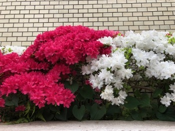 2019Apr29-Flower2 - 1.jpg