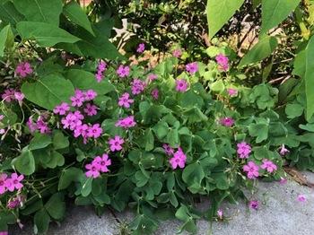 2019Jul28-Flower1 - 1.jpg