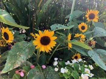 2019Jul28-Flower2 - 1.jpg