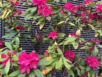 2019Mar30-Flower - 1.jpg