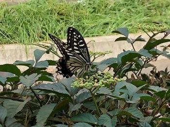 2019Sep27-Butterfly - 1.jpg