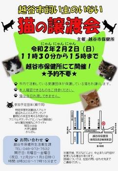 2020Jan21-越谷市保健所譲渡会 - 1.jpeg