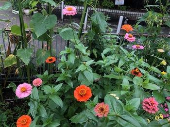 2020Jul25-Flower1 - 1.jpeg