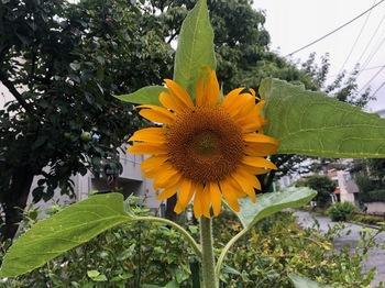 2020Jul5-Flower4 - 1.jpeg