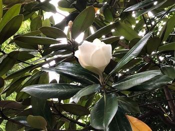 2020Jun21-Flower - 1.jpeg
