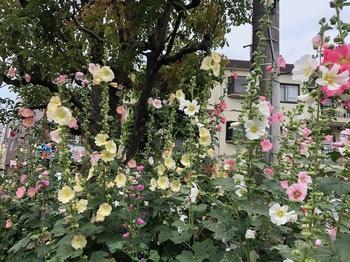 2020Jun6-Flower2 - 1.jpeg
