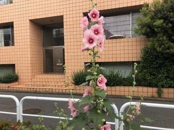 2020May27-Flower1 - 1.jpeg