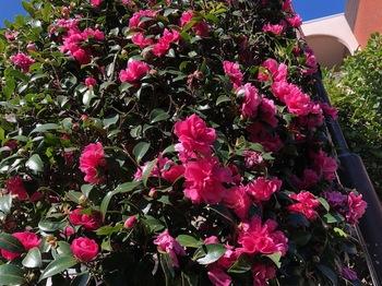 2020Nov14-Flower - 1.jpeg