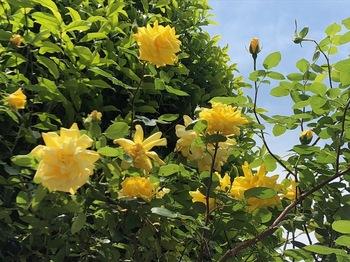 2021Apr24-Flower3 - 1.jpeg