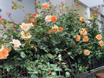2021Apr27-Flower1 - 1.jpeg