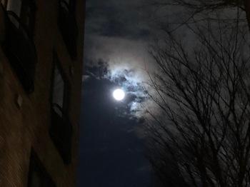 2021Jan27-Moon - 1.jpeg