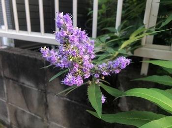 2021Jul19-Flower1 - 1.jpeg
