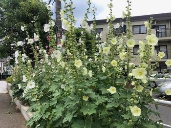 2021Jun13-Flower2 - 1.jpeg