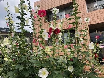 2021Jun13-Flower3 - 1.jpeg