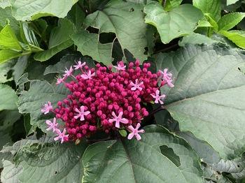 2021Jun13-Flower5 - 1.jpeg