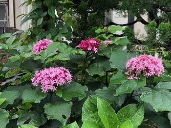 2021Jun19-Flower1 - 1.jpeg