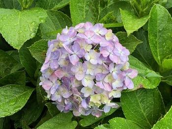 2021Jun19-Flower2 - 1.jpeg