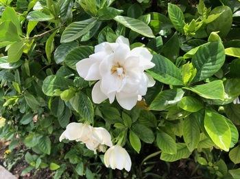 2021Jun22-Flower1 - 1.jpeg