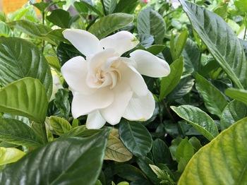 2021Jun22-Flower2 - 1.jpeg