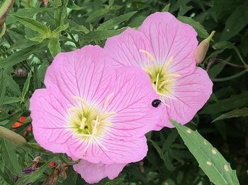 2021Jun26-Flower1 - 1.jpeg