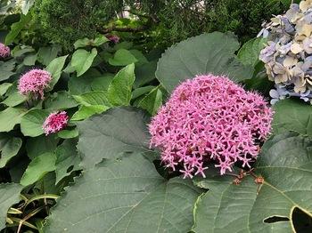 2021Jun26-Flower5 - 1.jpeg