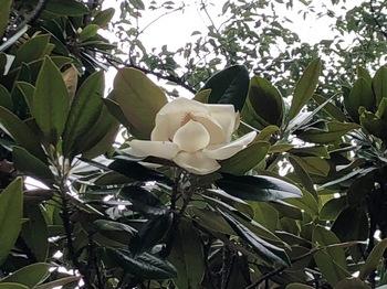 2021Jun27-Flower3 - 1.jpeg