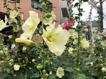 2021Jun5-Flower4 - 1.jpeg