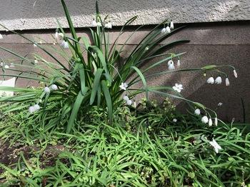 2021Mar17-Flower - 1.jpeg