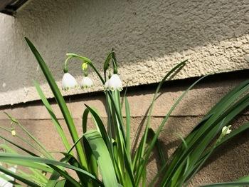 2021Mar17-Flower2 - 1.jpeg