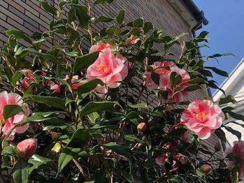 2021Mar18-Flower1 - 1.jpeg