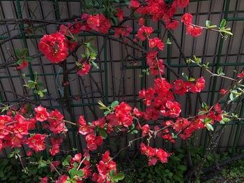 2021Mar18-Flower2 - 1.jpeg