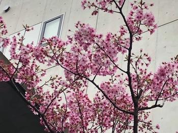 2021Mar20-Flower2 - 1.jpeg