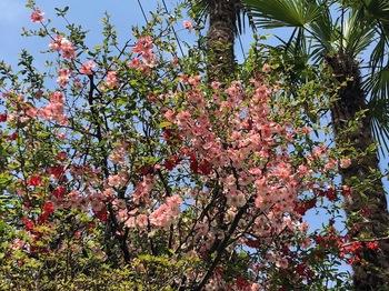 2021Mar27-Flower2 - 1.jpeg