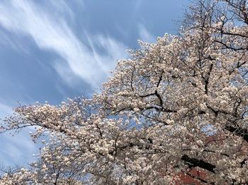 2021Mar27-Sakura3 - 1.jpeg