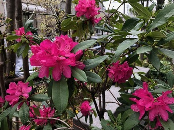 2021Mar28-Flower2 - 1.jpeg