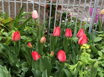 2021Mar28-Flower3 - 1.jpeg