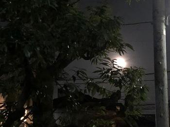 2021Mar29-Moon1 - 1.jpeg