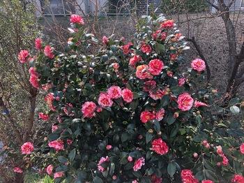 2021Mar6-Flower5 - 1.jpeg