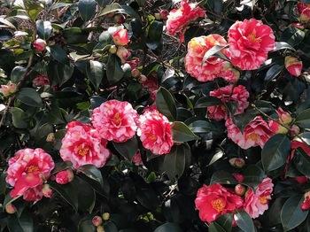 2021Mar6-Flower6 - 1.jpeg