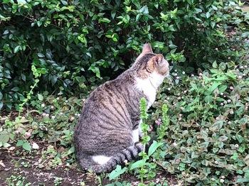2021May22-Cat - 1.jpeg