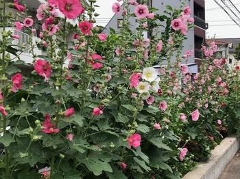 2021May29-Flower2 - 1.jpeg