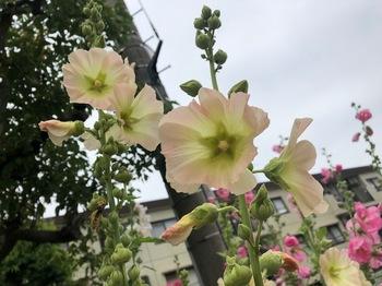 2021May29-Flower4 - 1.jpeg