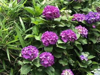 2021May29-Flower6 - 1.jpeg