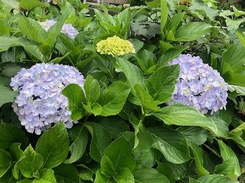 2021May29-Flower8 - 1.jpeg