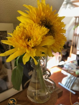 2021Nov22-Sunflower - 1.jpeg